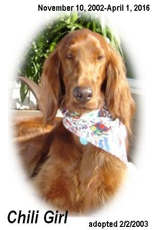 Irish Setter Rescue Stories
